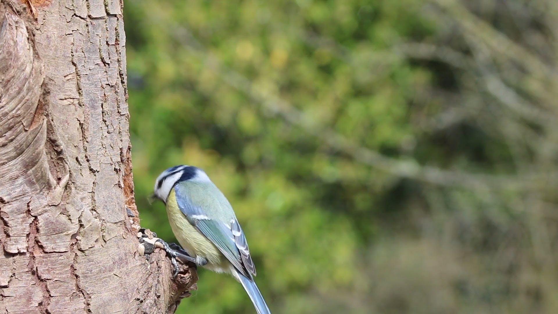 Bird Eating