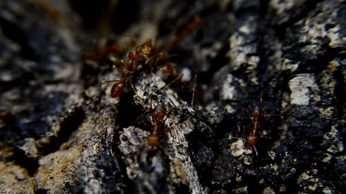 Close-Up Video Of Ants