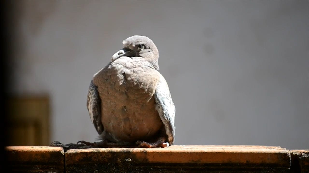 Video Of Bird Perched
