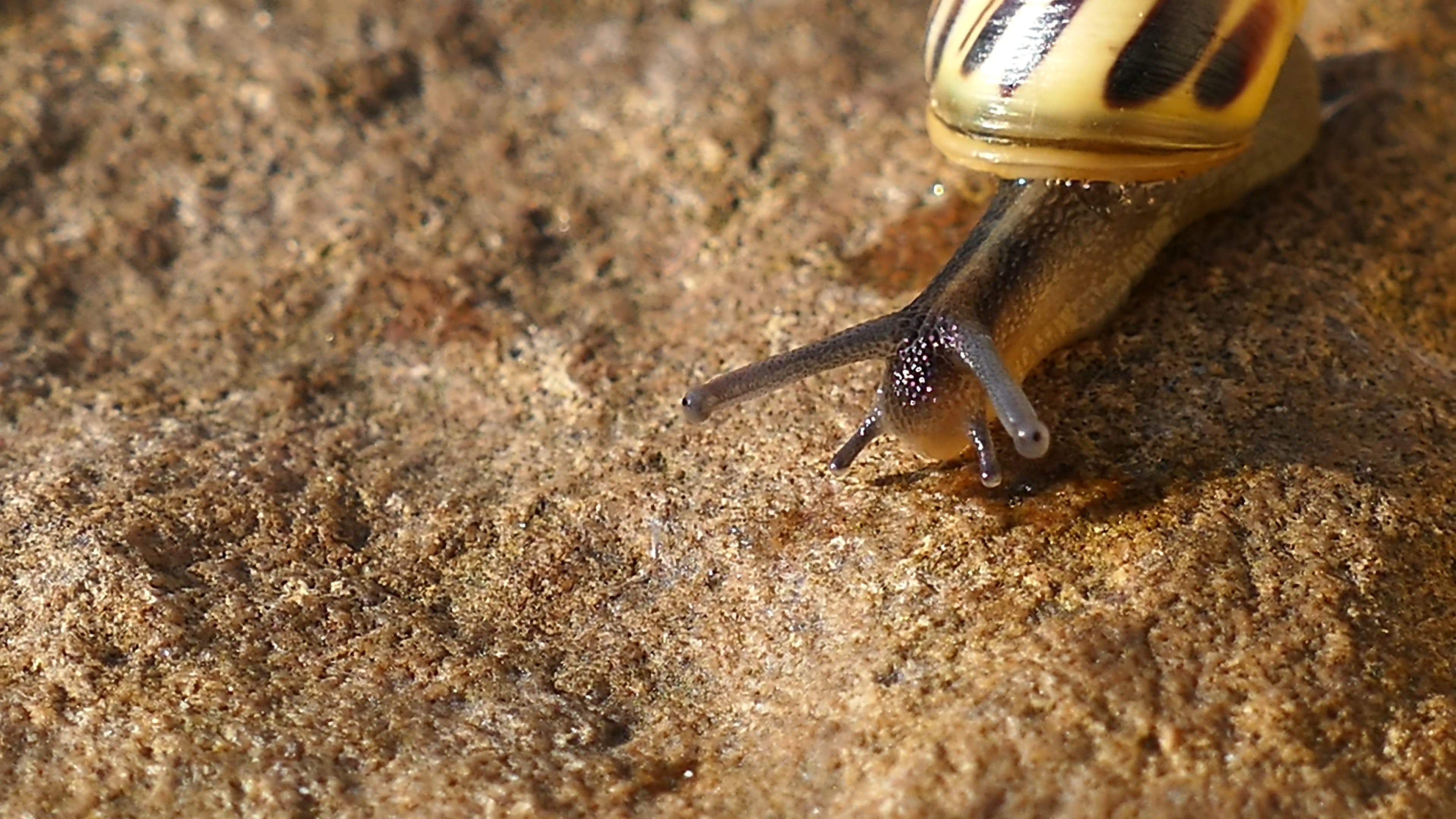 Close-Up Video Of Snail