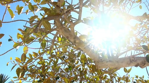 Video Of Tree With Sun Glaring