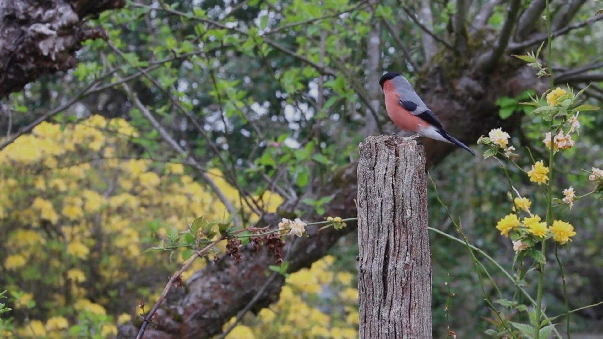 Bird Perched On A Wood