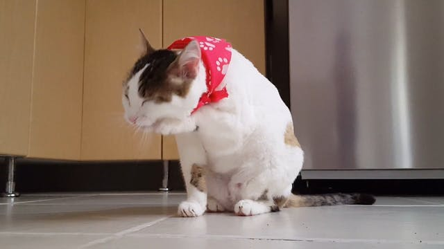 Video Of Funny Cat