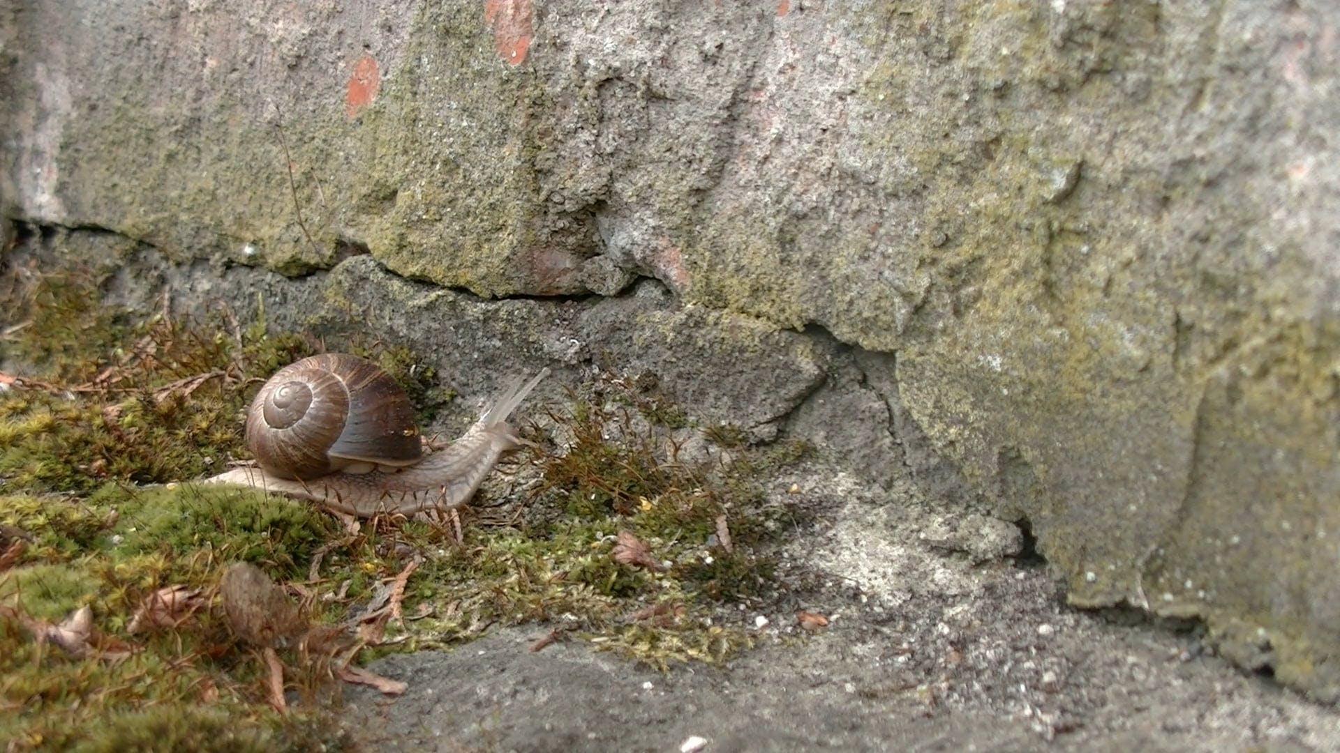 Slithering Snail