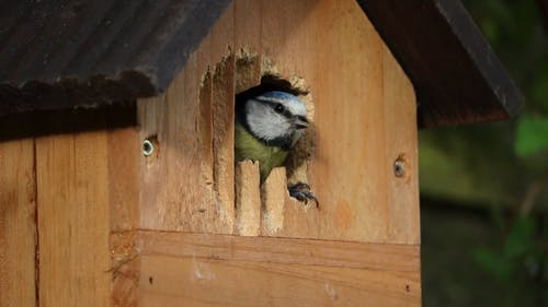 Bird Inside A Bird House
