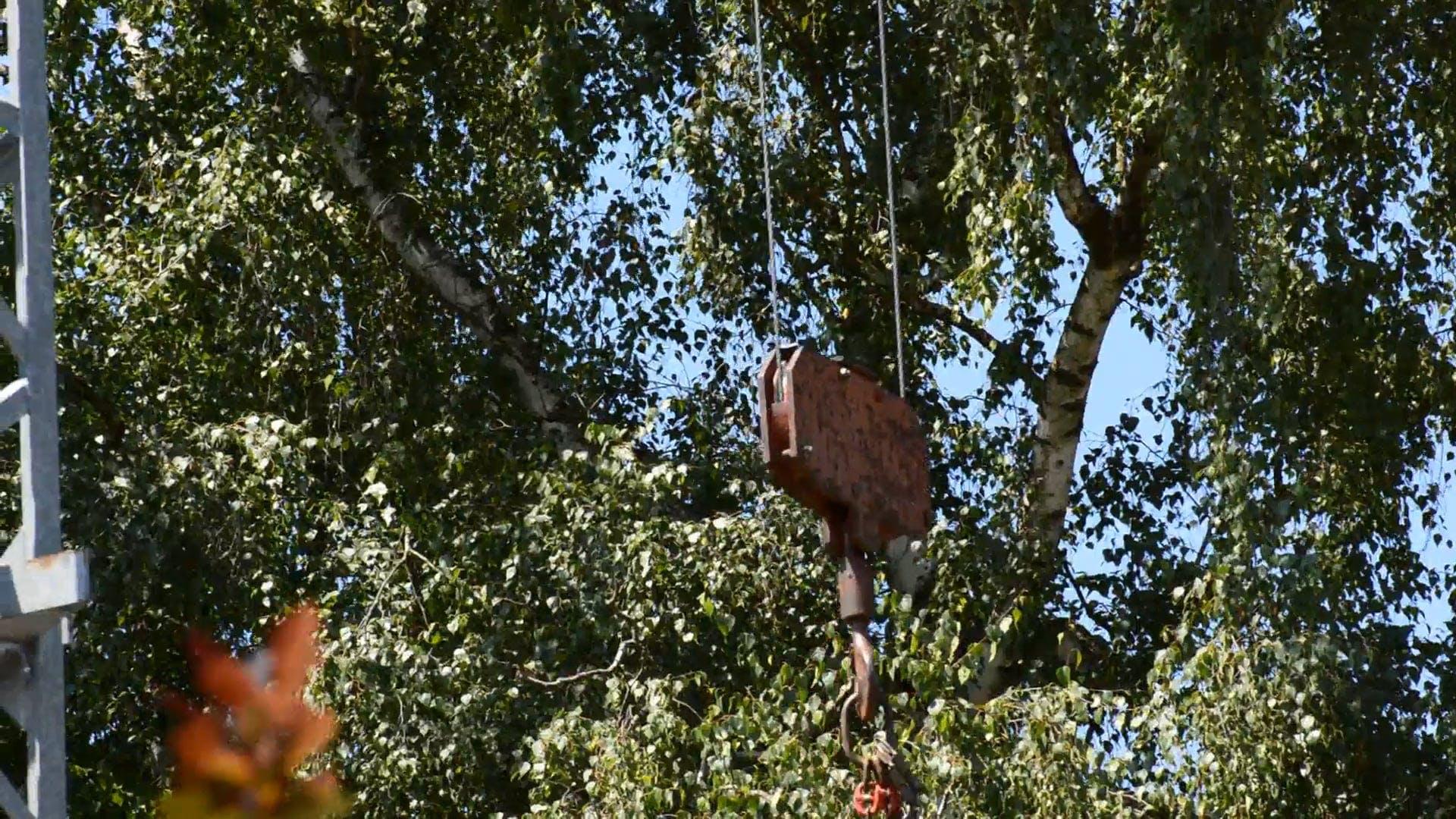 Video Of Crane