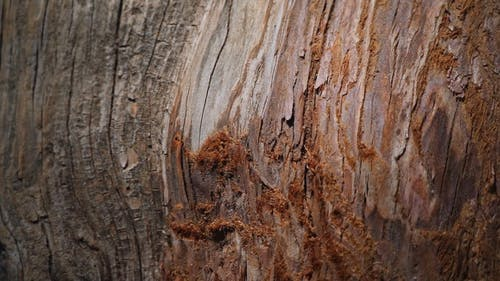 An Ant Crawling on a Tree Bark
