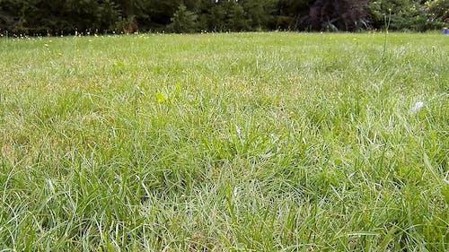 Bird On Green Grass