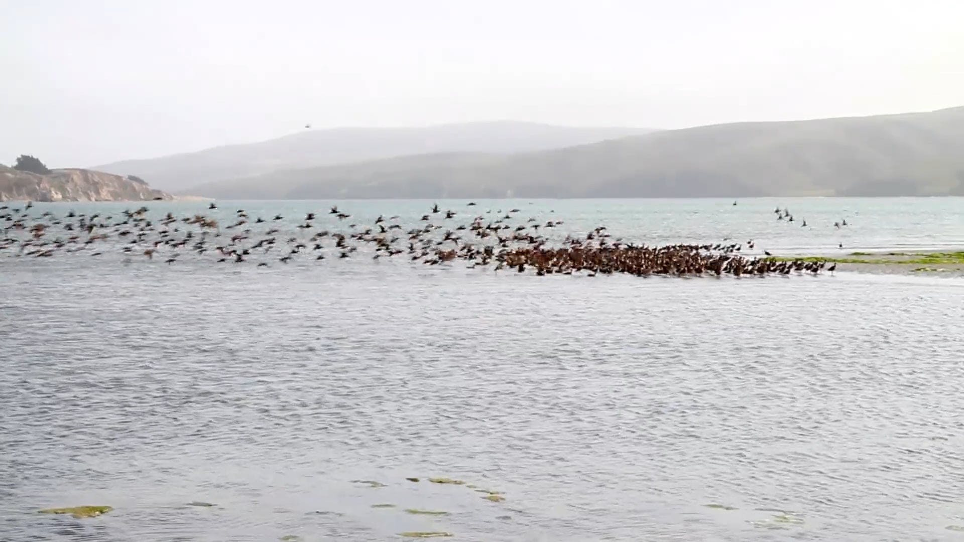 Flock of Birds in the Sea