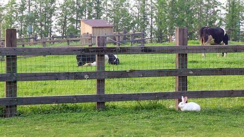 White Rabbit Near The Fence