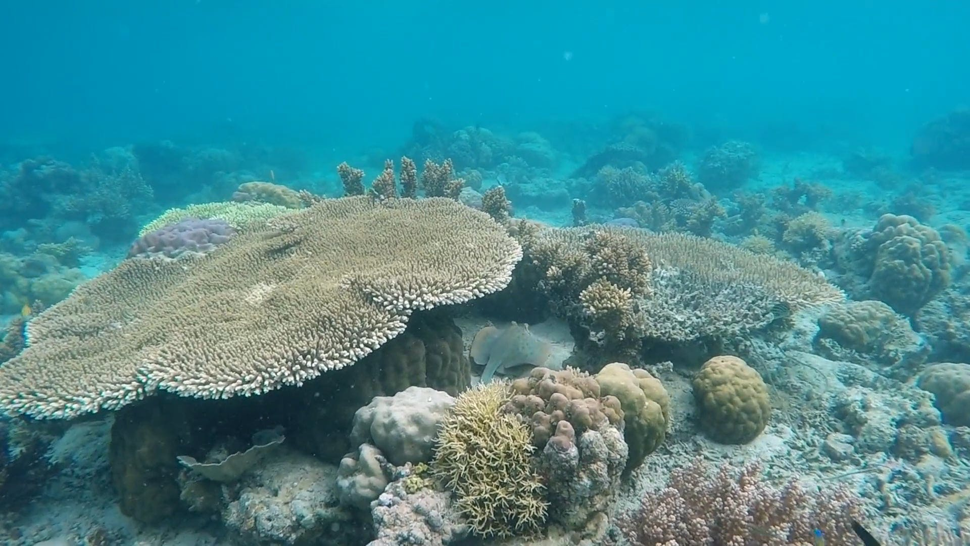 Creatures Underwater