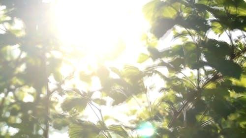 Sun Glaring Down The Trees