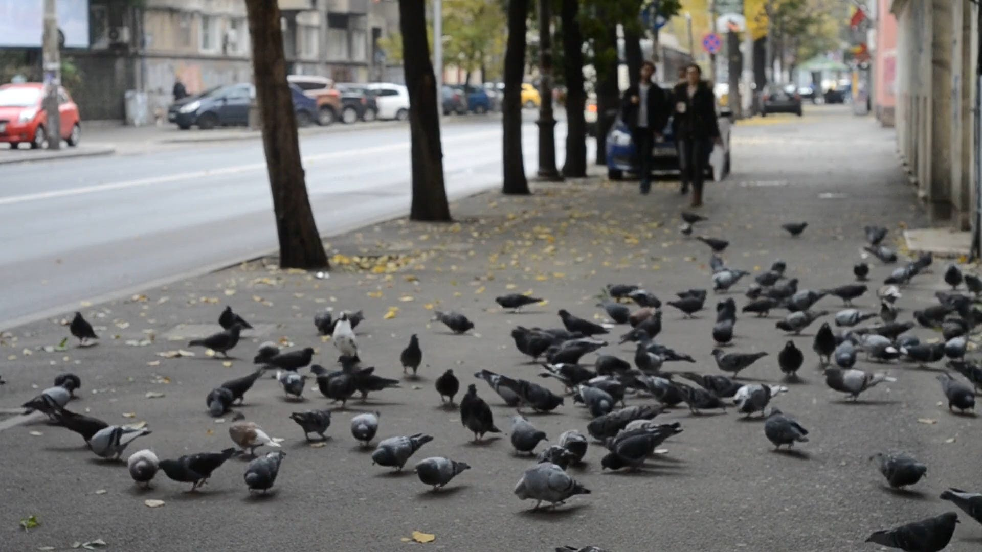 Pigeons On Ground
