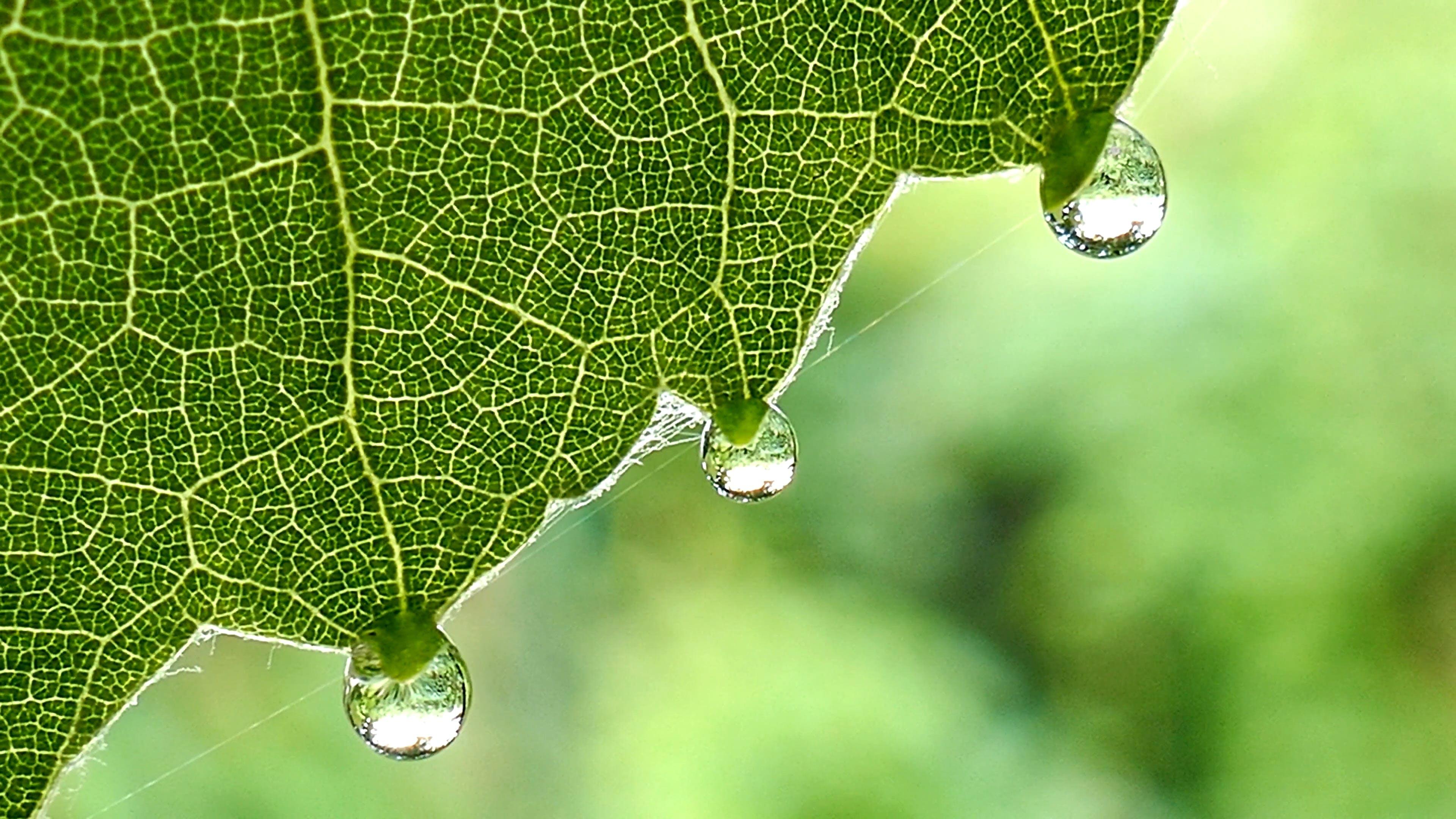 Close-Up Shot Of Leaf
