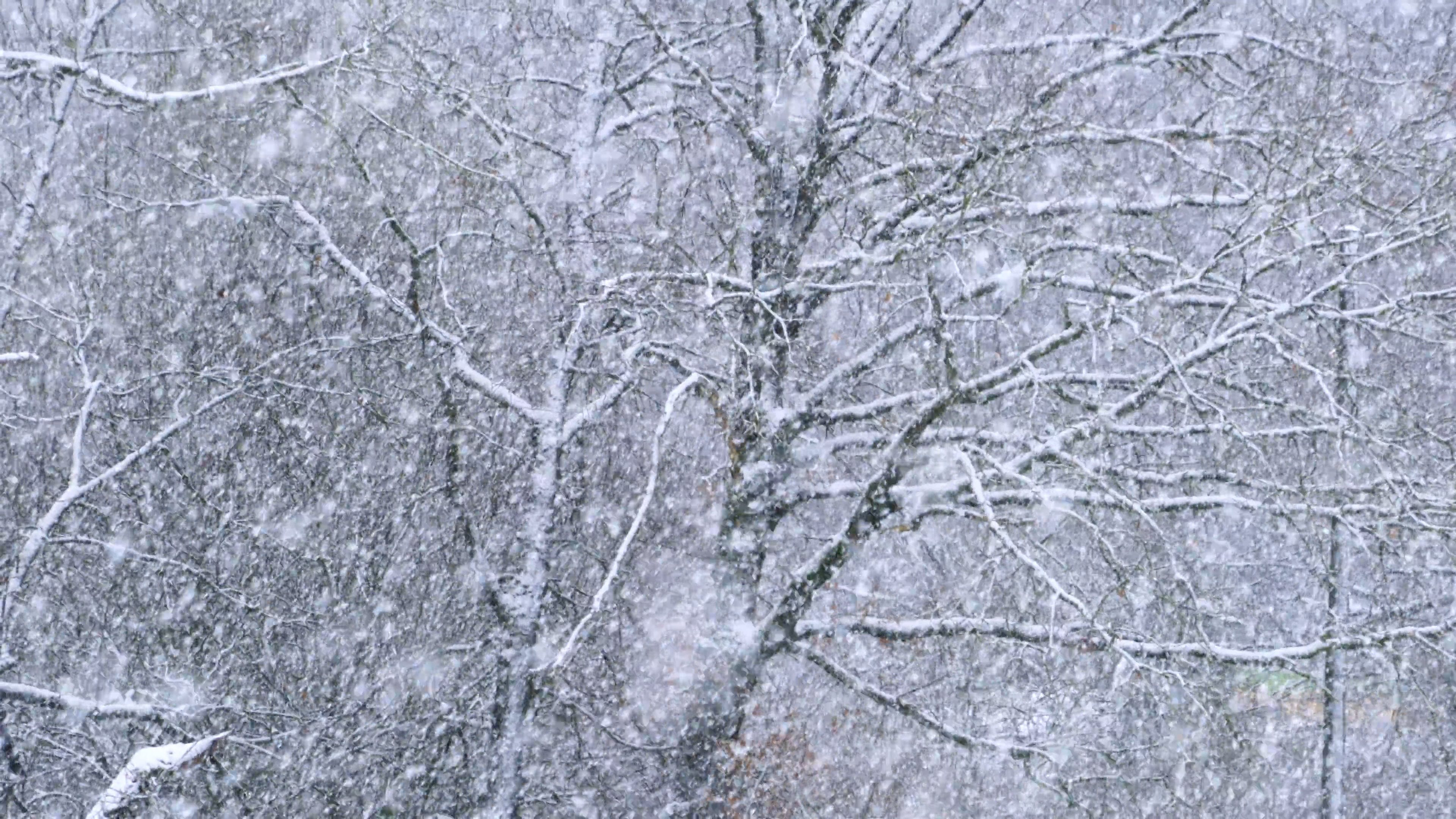 Video Of Snowfall