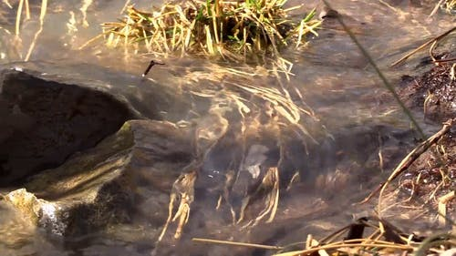 Close-Up Video Of Water Flowing