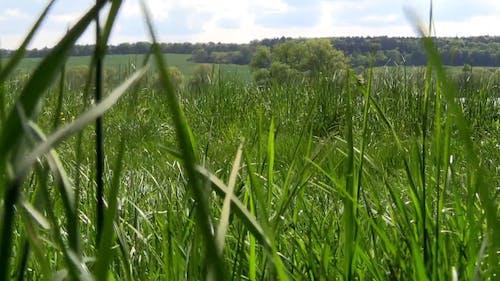 Near Lake Green Grass