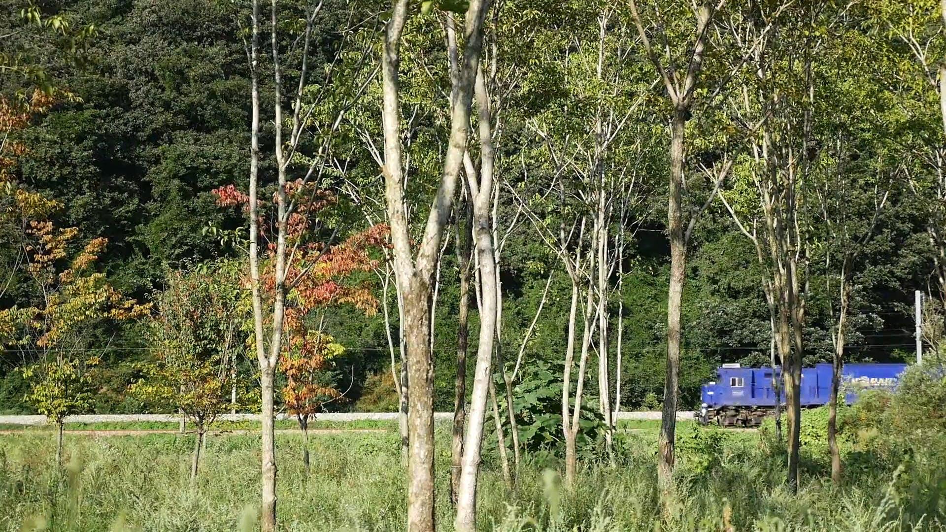 Train Passing Through Trees