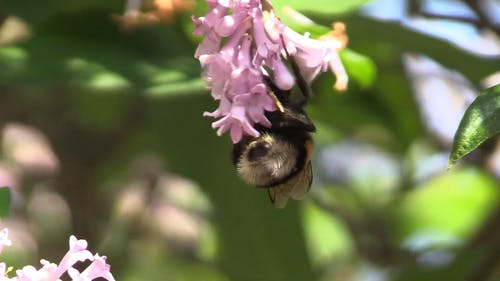 Close-Up Shot Of Bee Pollinating