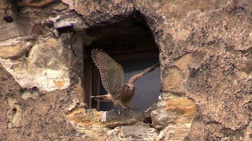 窓ガラスにとまる鳥