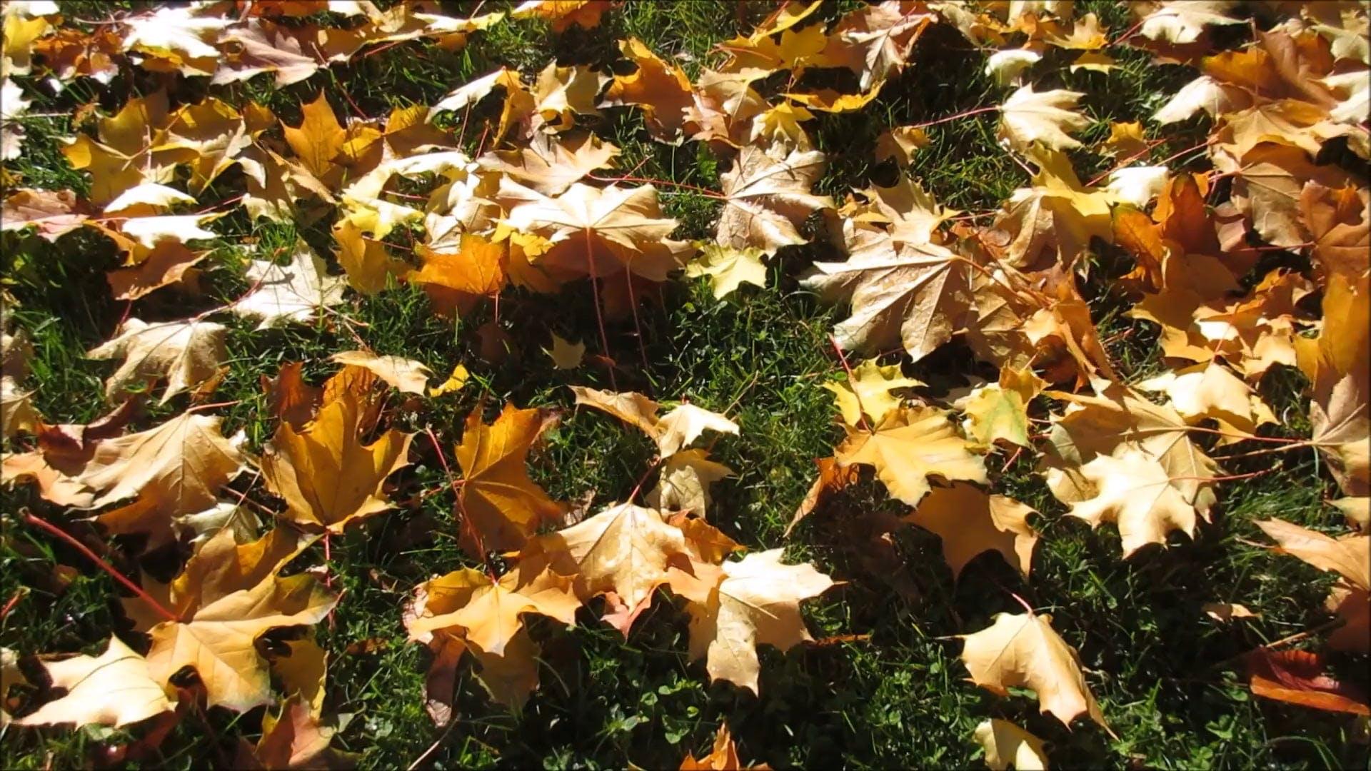 Dry Leaves On Ground