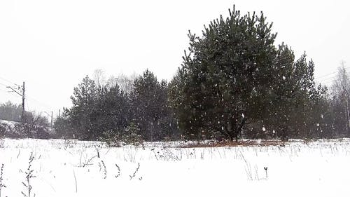 Video Footage Of Snowfall