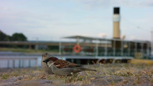 Close Up Video Of Three Little Birds