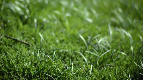 Close-Up Video Of Grass