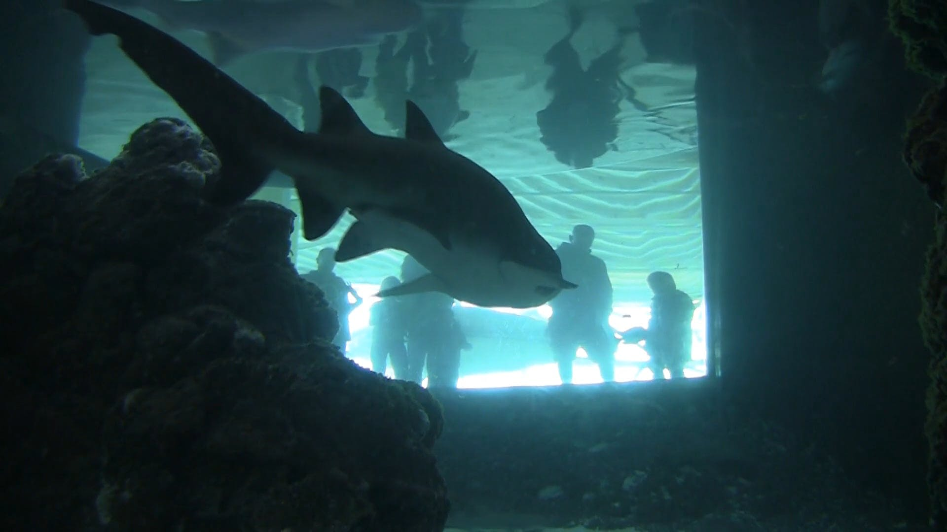 Shark Inside An Aquarium