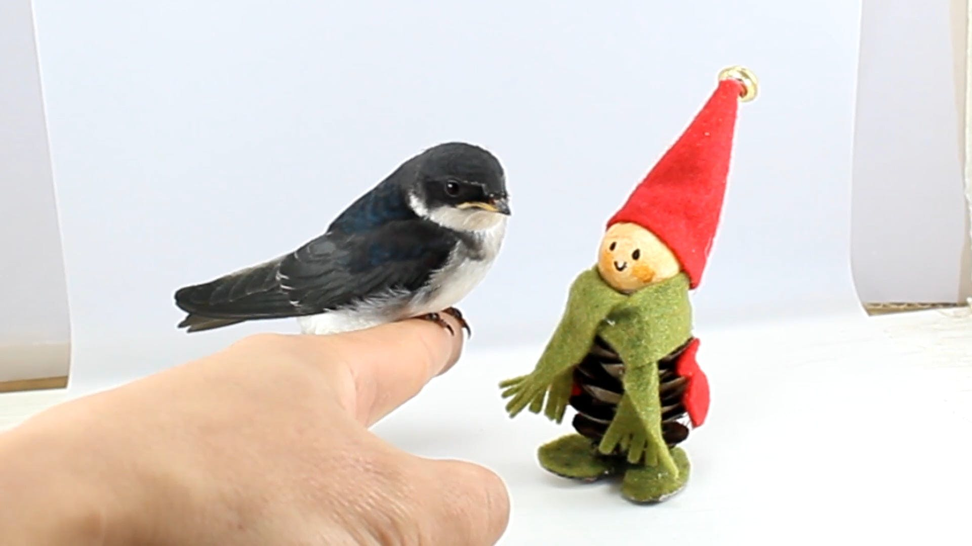 Bird Perched On A Finger