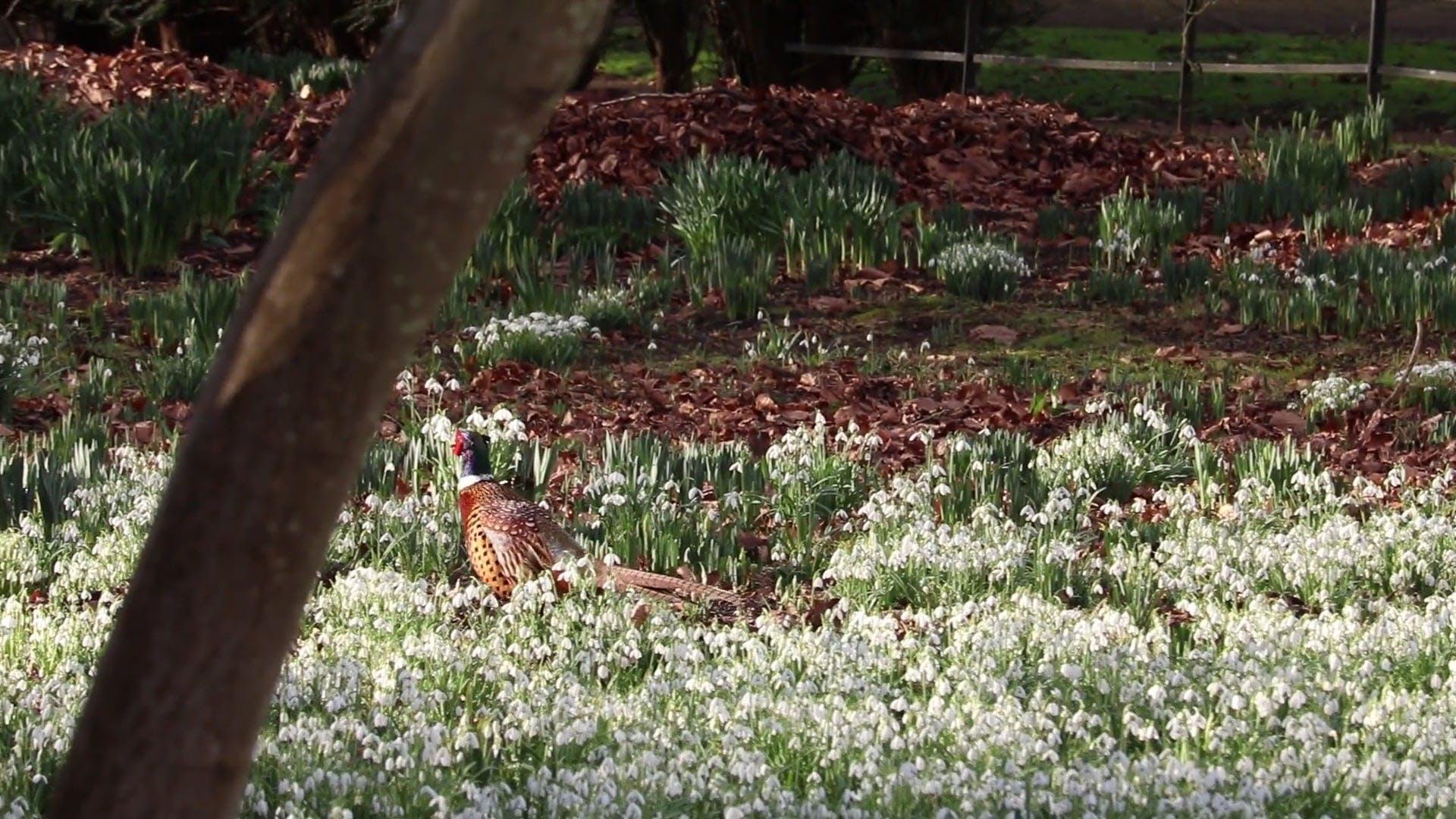 Duck Walking Around