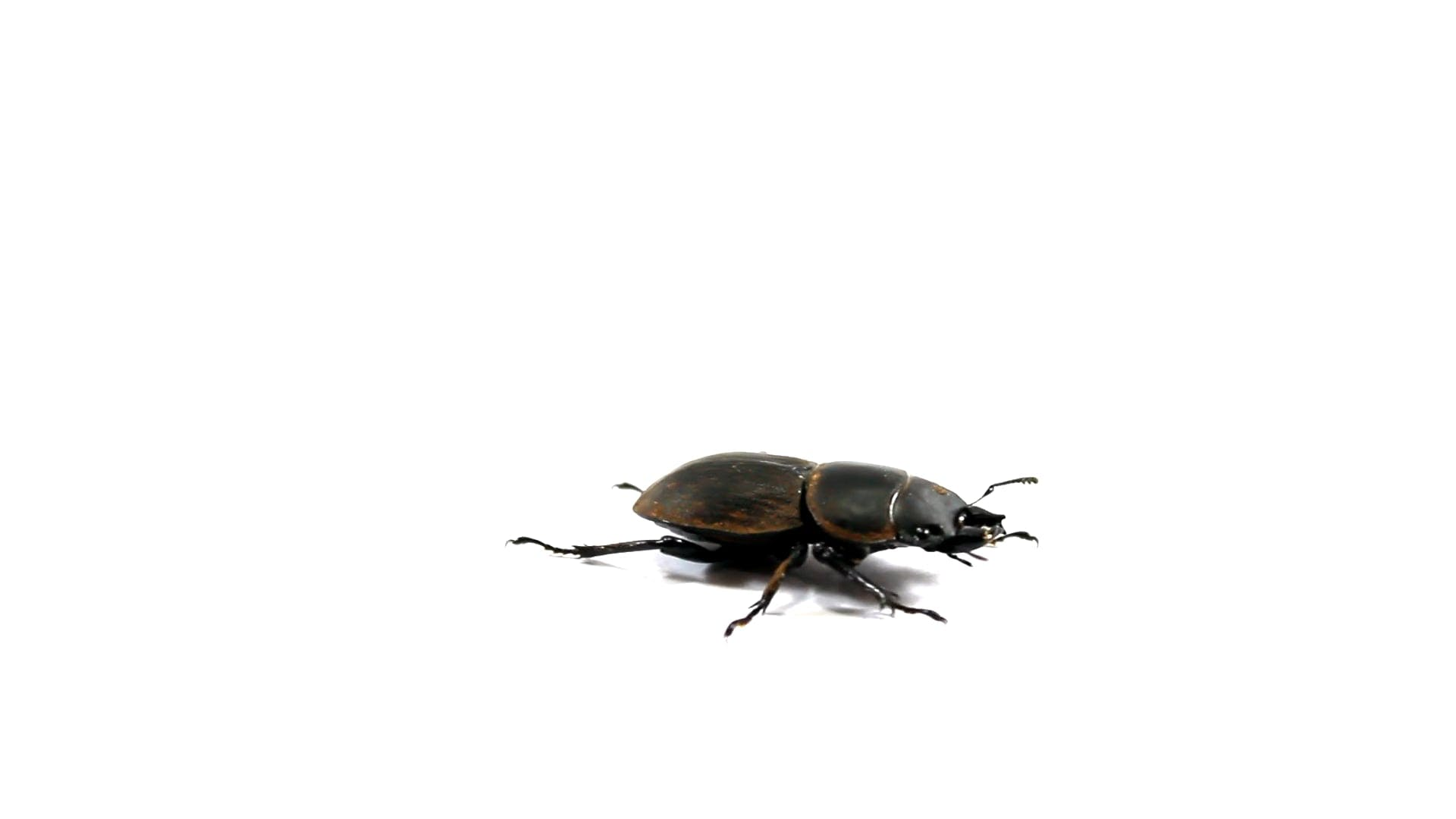 Video Of A Beetle