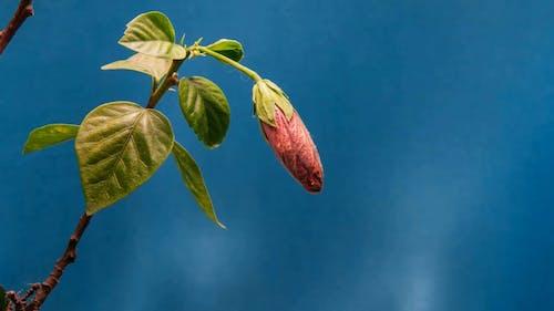 Flora Blooming