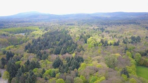 Aerial Shot Of Woods