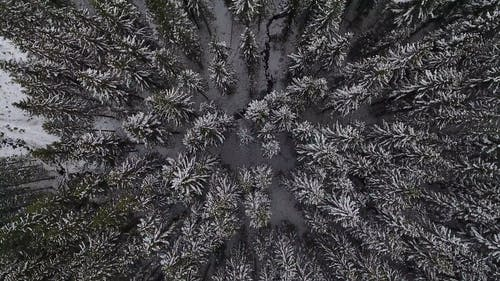 Aerial Shot Of Snowy Trees