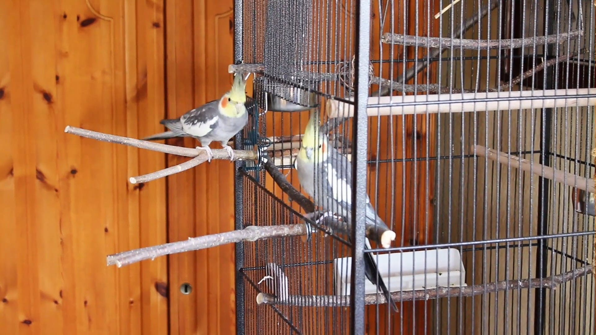 Two Beautiful Birds In A Cage