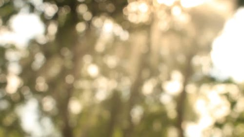 Sun Glare From Trees