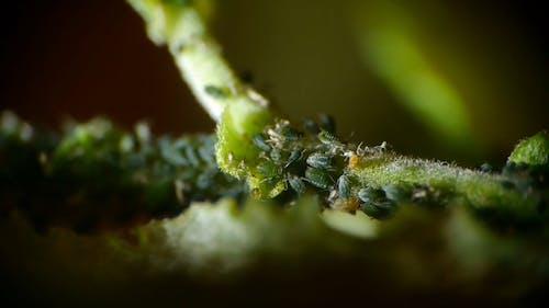 Tiny Green Bugs
