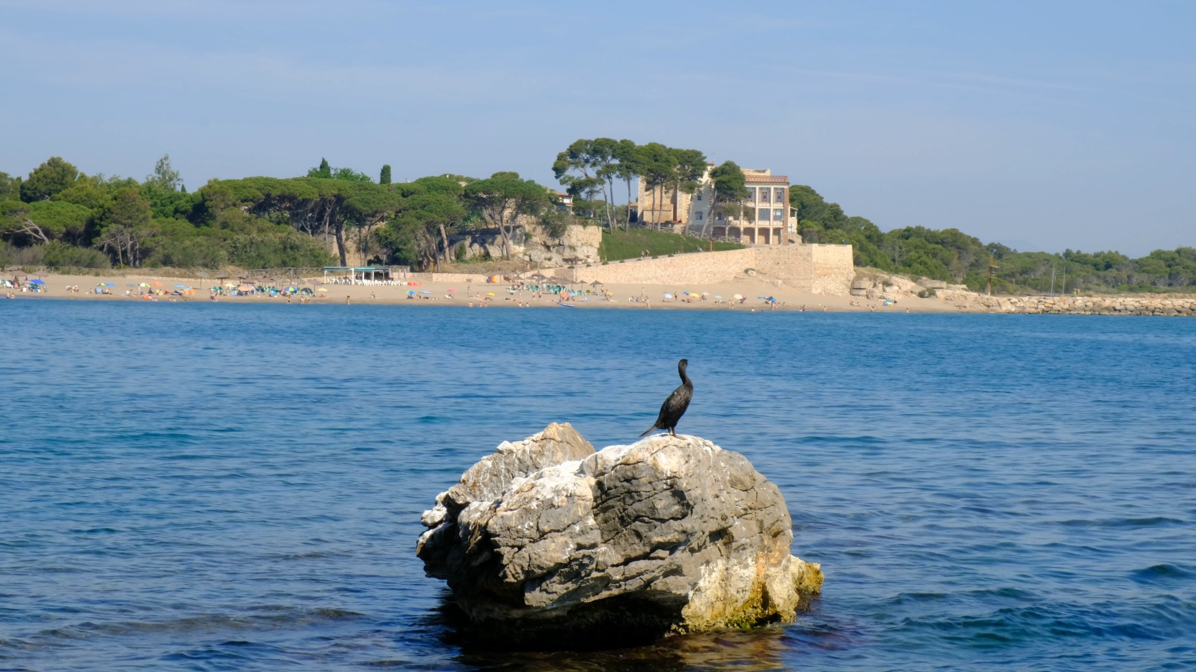 Bird Perched On Rock
