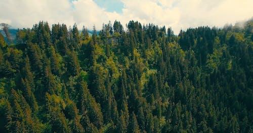 森のドローンショット