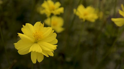 Close Up Video Of Yellow Flower