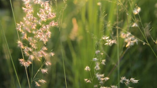 Close-Up Shot Of Grass