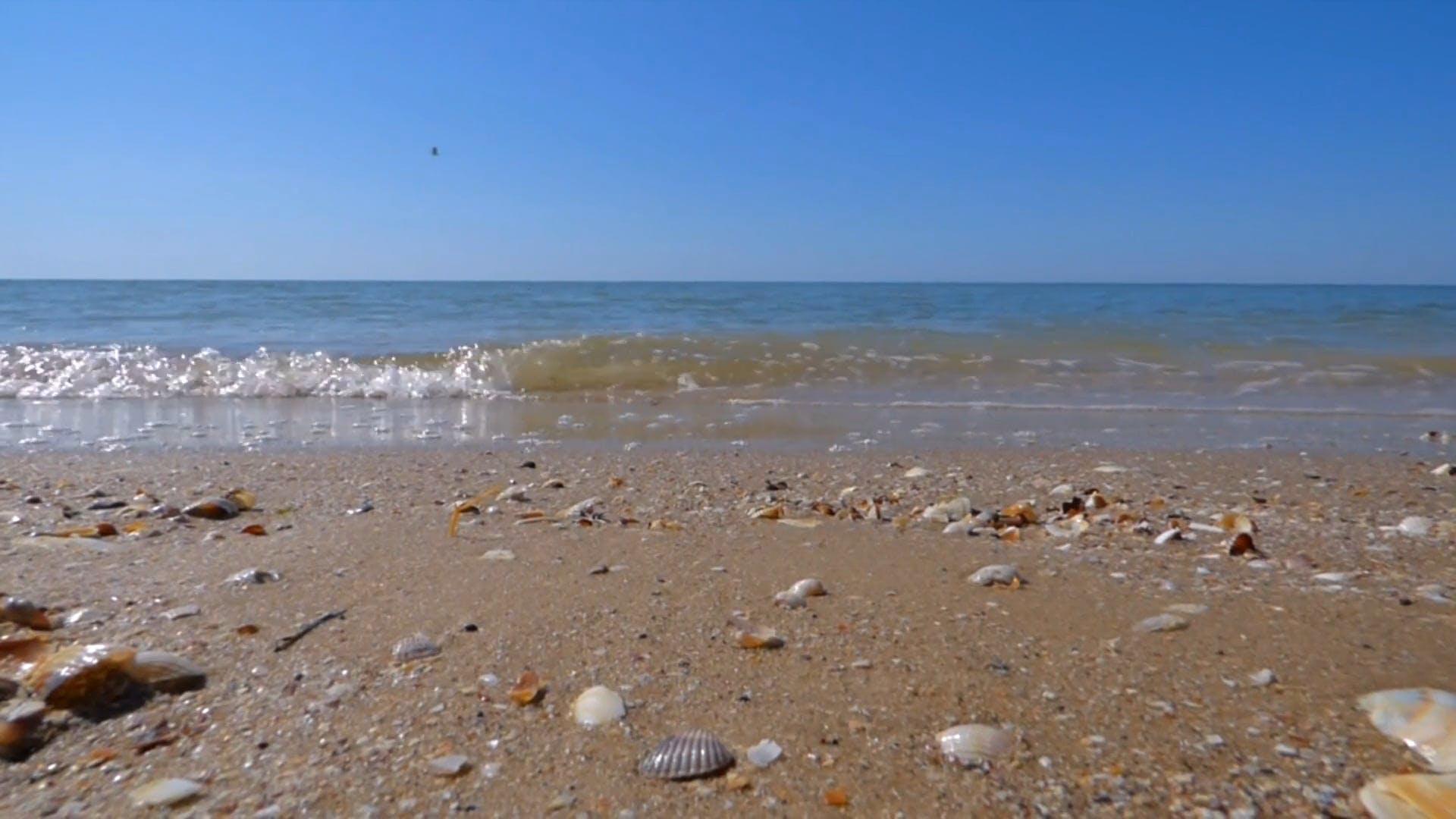 Sea Shells On Shore