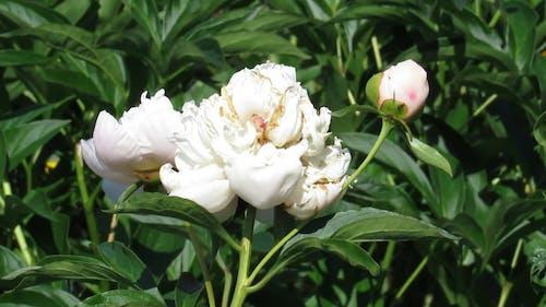 Video Of White Flower