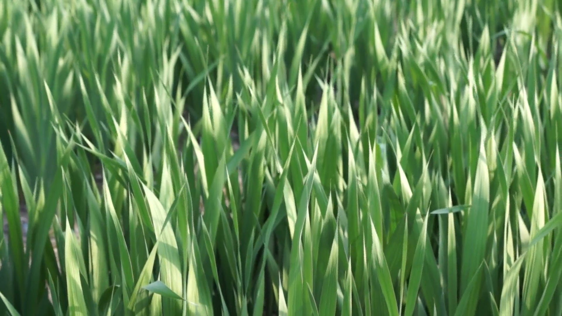 Field Filled With Green Grass