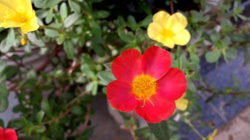 Bir çiçeğin Makro çekimi