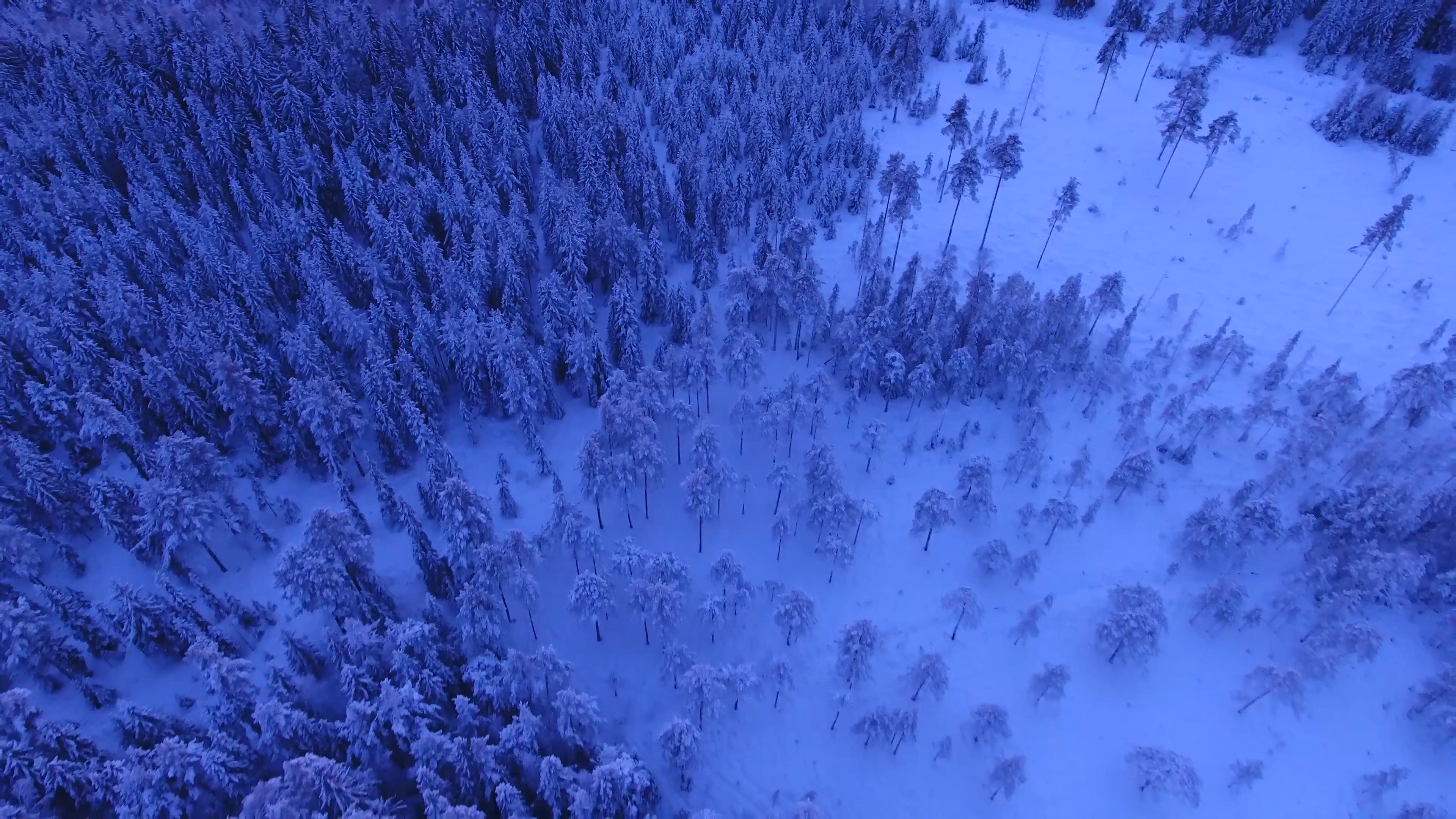 Aerial Shot Of Forest During Winter