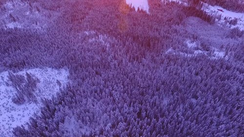 Aerial Shot Of Forest Trees