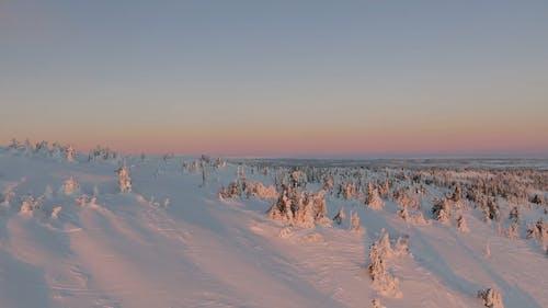 Vidéo D'arbres Couverts De Neige