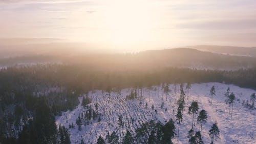 Drone Tourné De Forêt
